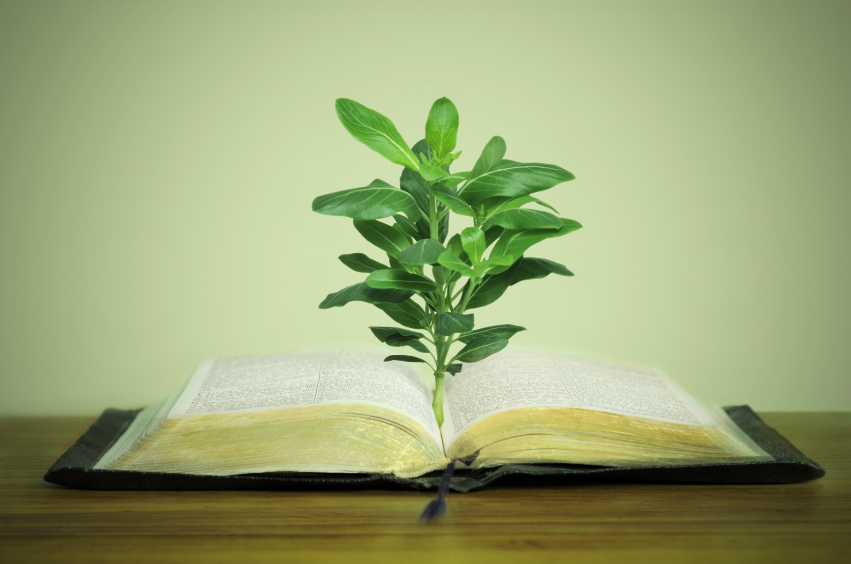 Plant sprouting out of the Bible